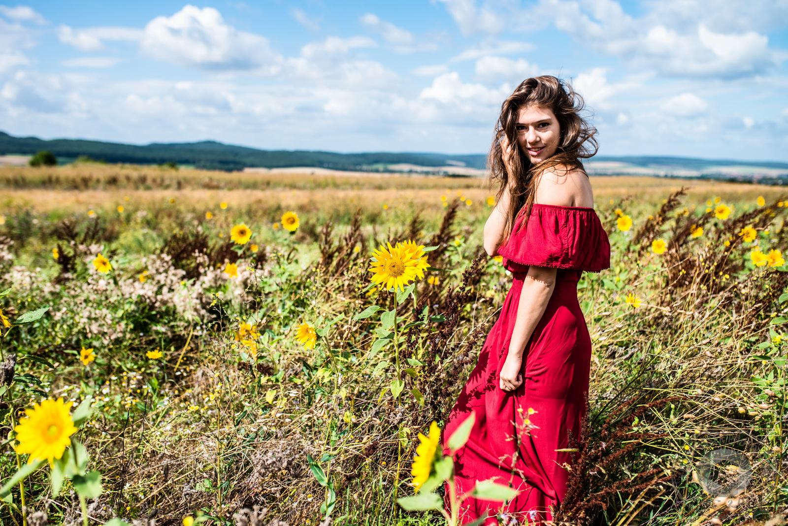 Rosa im Feld